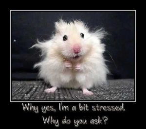 Stress reduction, lifestyle therapy, brainspotting, Bsp